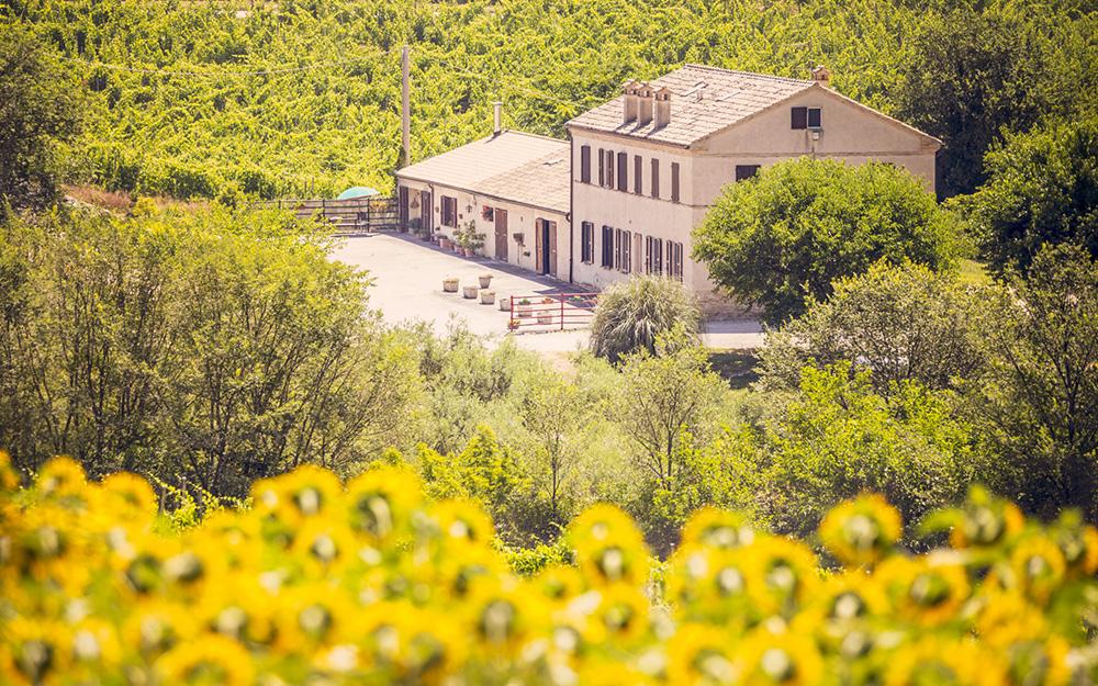 Case vacanza nelle Marche, casale Feliciani tra i girasoli